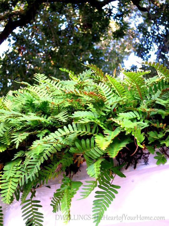 rooftop-fern