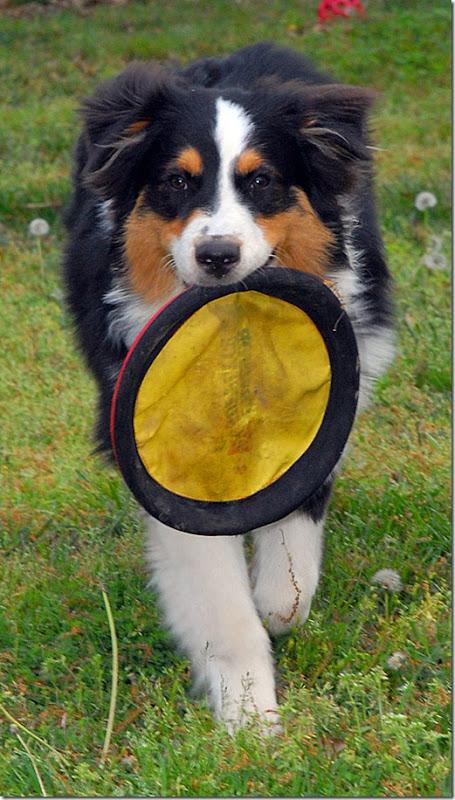 frisbee5532