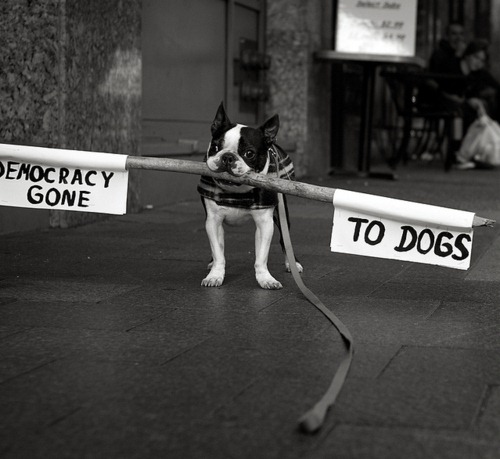 cute-pets-at-occupy-wall-street-12