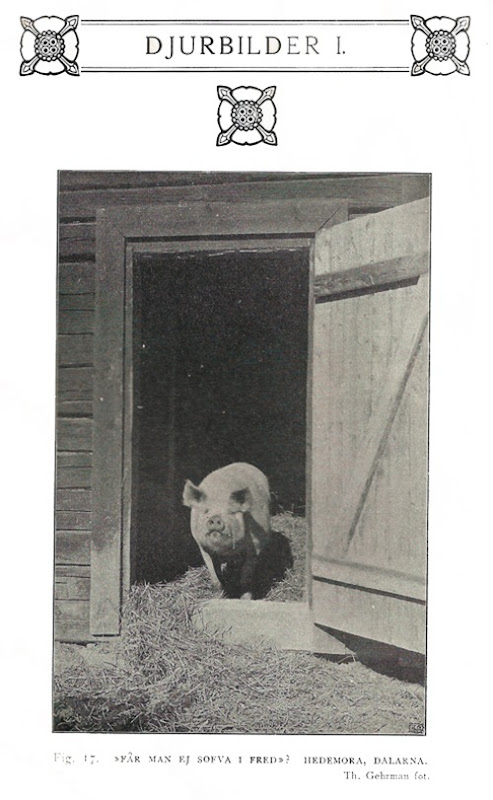1908_6