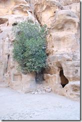 Oporrak 2011 - Jordania ,-  Pequeña Petra, 22 de Septiembre  23