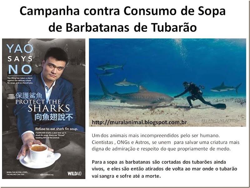 Campanha contra Consumo de Sopa de Barbatanas de