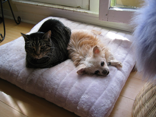 Here she is with one of her feline sisters -- the lovely 3-legged Ms. Olive.
