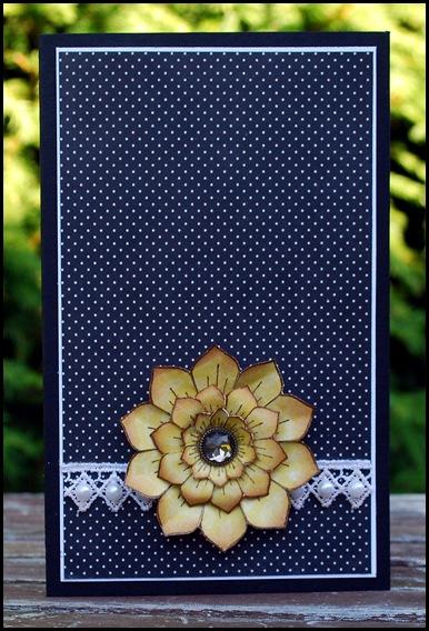 CAS sunflower