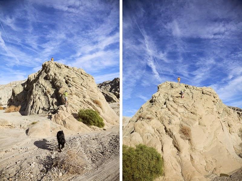 orocopia climbing