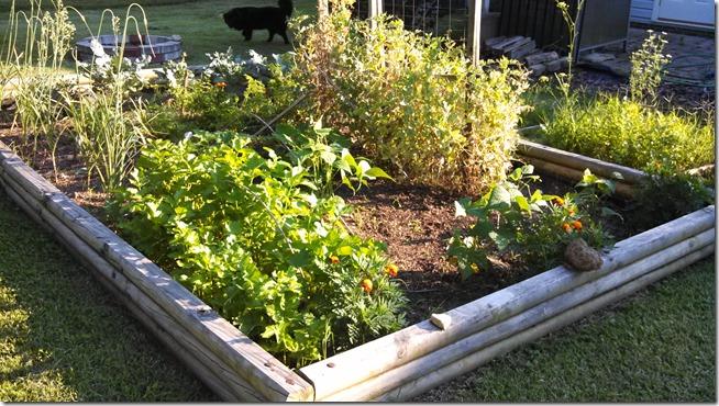 garden 06 (25)