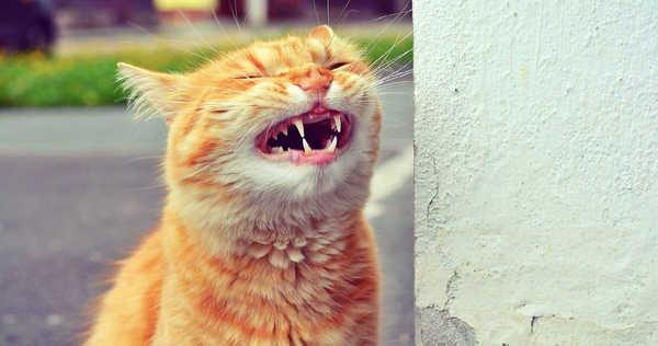Animais tambem sabem rir 9