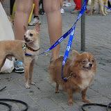 Pet Express Doggie Run 2012 Philippines. Jpg (278).JPG