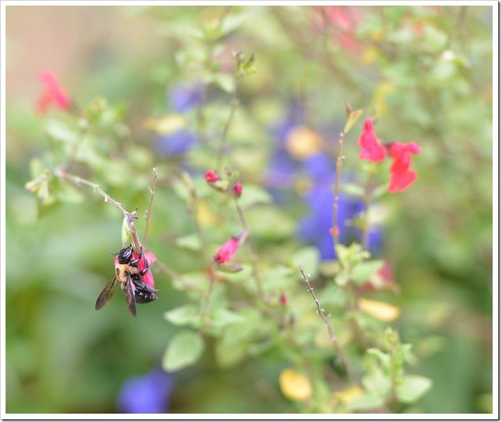 bees-ed fb 005