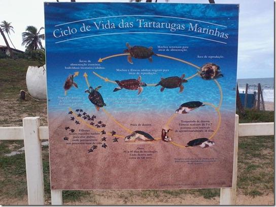 2012-06-02 - 56 Projeto Tamar