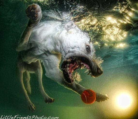Underwater Dog  013