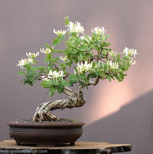 bonsais arvores em miniatura desbaratinando (4)
