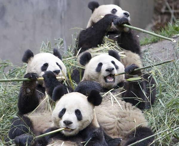 2- Pandas