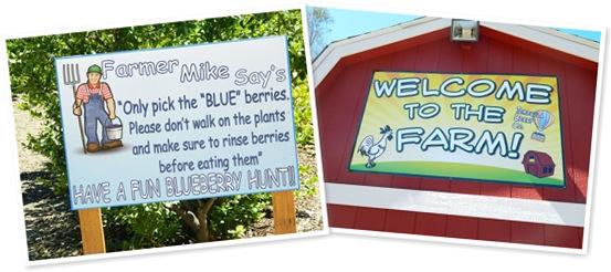 View blueberry farm