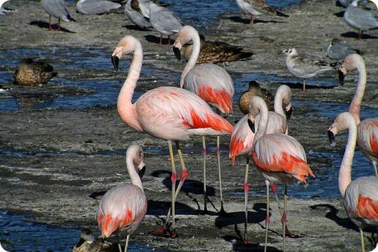 lago nimes flamencos