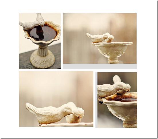 birdbath collage