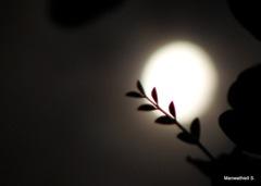 Moon_Romance_1_Closeup_by_Manwathiell