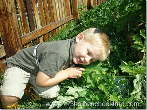 Kids tending to watermellon in kids garden