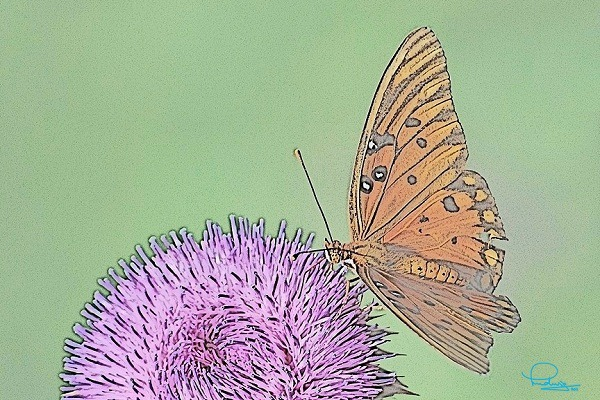 butterfly-A400