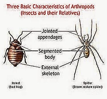 arthropoda-characteristics