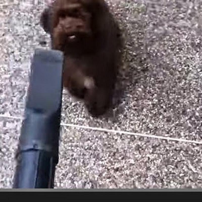 Η μεταμόρφωση του σκύλου