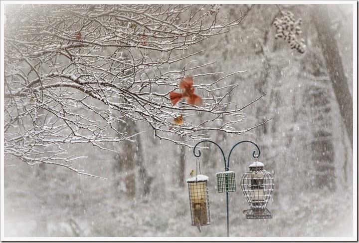 snow-2-25-15-1-3FB