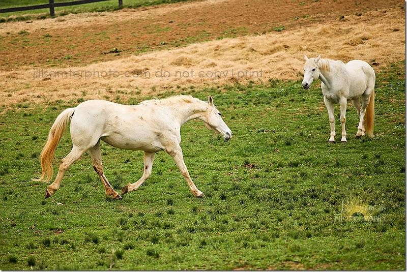 horses-5503