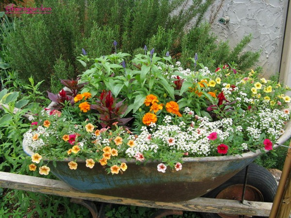 wheelbarrow flowers