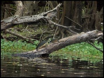 Paddle to Hontoon 075