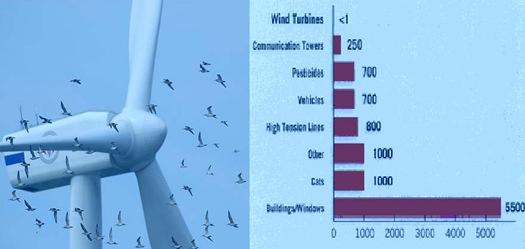 Causes of Bird-kill