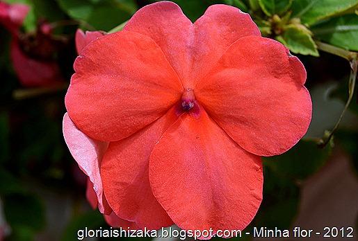 Glória Ishizaka - minhas flores - 2012 - 27