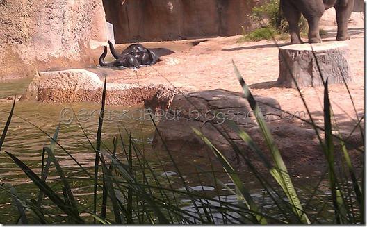 zoo-elephants
