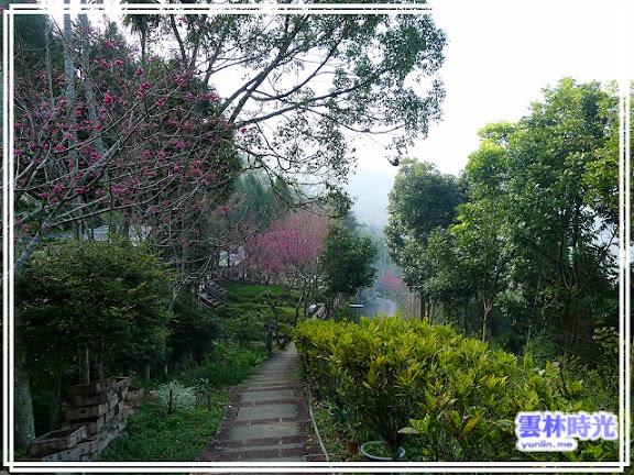 賞櫻小步道
