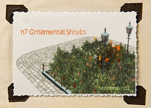 Ornamental Shrubs (n7) lassoares-rct3