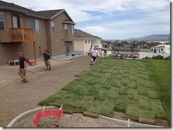 Laying Sod (22)