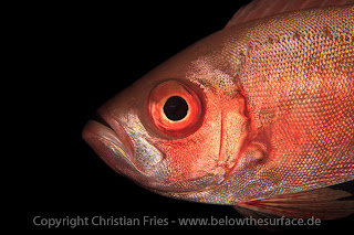 Red Sea Workshop - Fish Portraits
