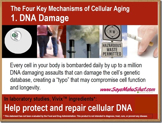 The 4 Mechanisms of Cellular Aging_DNA Damage_Vivix