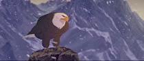 18 l'aigle (Sitka)
