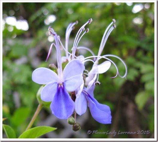 04-05-bluebutterfly