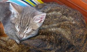 xmas_cat_06