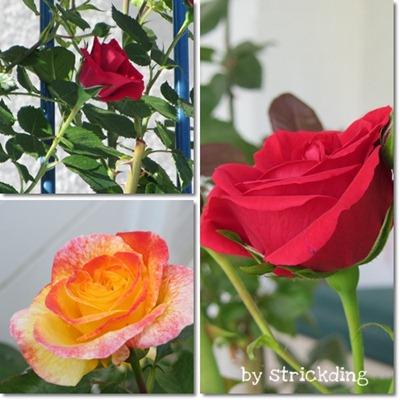 rosencollage