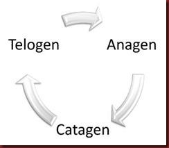 A Cyclical Hair Growth Pattern
