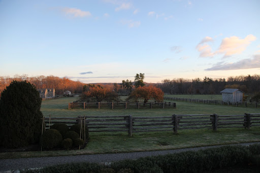 What a stunning morning Francesca!  There seems to be a big buzz of activity down by the stable.  Let's go check it out.