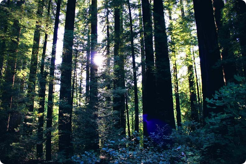 redwood 7