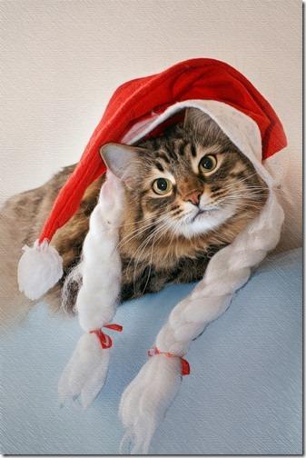 navidad imagenes (12)
