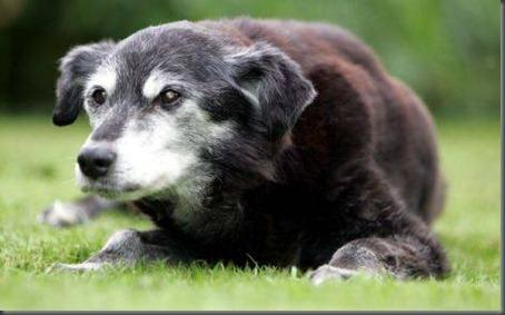 oldest-dogs-guinness-world-03