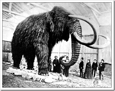 Woolly mammoth via Animal Planet, picture uncredited