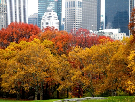 Autumn_colors_new_york_skyline