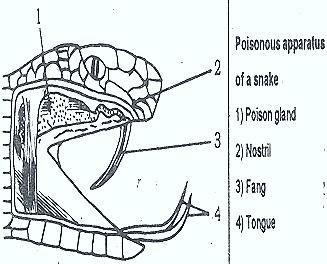 snake-poison-apparatus