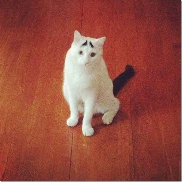 white-cat-eyebrows-2